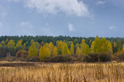 Beautiful Colorful Autumn Royalty Free Stock Image
