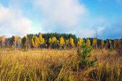 Beautiful Colorful Autumn Stock Image