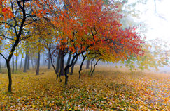 Beautiful Colorful Autumn Royalty Free Stock Photography