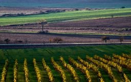 Beautiful colorful autumn landscape with vineyards and a road between fieldsSouth Moravia, Czech Republic stock image