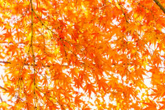 .Beautiful Colorful Autumn Leaves Stock Photos