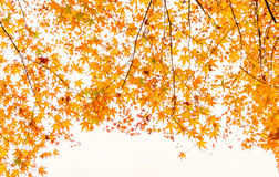 ,Beautiful Colorful Autumn Leaves Royalty Free Stock Photos