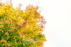 .Beautiful Colorful Autumn Leaves Royalty Free Stock Photography