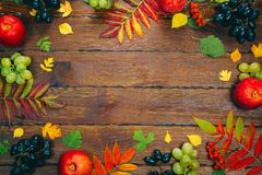 Beautiful colorful autumn leaves, berries, apples and grapes frame on wooden background Royalty Free Stock Photos