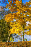 Beautiful colorful autumn. Beautiful colorful autumn leaves in the city park Royalty Free Stock Photo