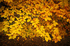 Beautiful Colorful Autumn Leaves Royalty Free Stock Images