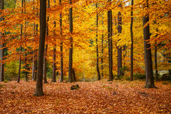 Beautiful Colorful Autumn Leaves Royalty Free Stock Photography