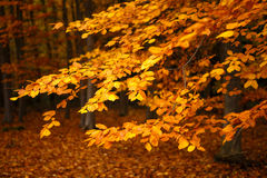 Beautiful Colorful Autumn Leaves Stock Photography