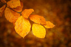 Beautiful Colorful Autumn Leaves Royalty Free Stock Photo