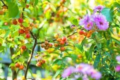 Beautiful Colorful Autumn Leaves Stock Photos