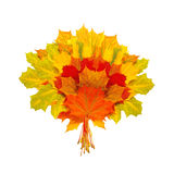 Beautiful colorful autumn leaves isolated on white Royalty Free Stock Photo