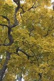 Beautiful Colorful Autumn Leaves,yellow and green leafs stock images