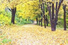 Beautiful colorful autumn park Stock Photos