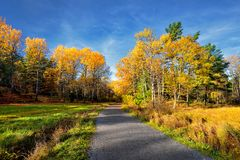 Beautiful colorful autumn park in sunny day Royalty Free Stock Images