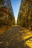 Beautiful colorful autumn park in sunny day Stock Photography