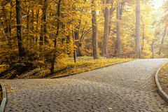 Beautiful colorful autumn park in sunny day Stock Photos