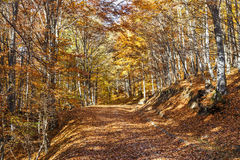Beautiful colorful autumn path with yellow leaves Stock Photos