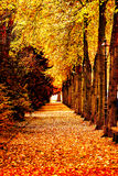 beautiful colorful autumn trees Royalty Free Stock Photos