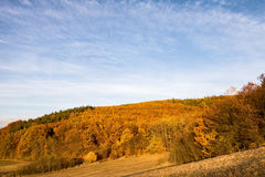 Beautiful colorful autumnal forest and pasture under blue sky Royalty Free Stock Photo