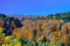 Beautiful colorful autumnal landscape of alsacien hills Stock Photography