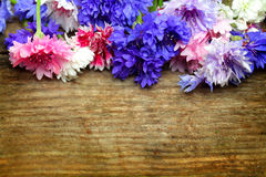 Beautiful colorful background - bright flowers Stock Images