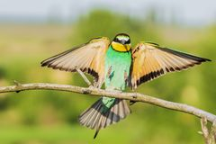 Beautiful colorful bird sits on a branch stock photography