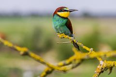 Beautiful colorful bird sitting on bright branches covered with moss stock image