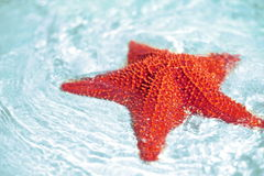 Beautiful colorful bright red starfish Royalty Free Stock Photos