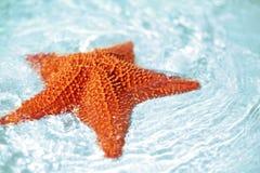 Beautiful colorful bright yellow starfish Stock Photo