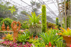 Beautiful colorful  bromeliad garden Royalty Free Stock Image