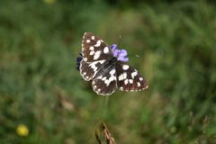 The beautiful colorful butterfly on the violet flower Royalty Free Stock Images