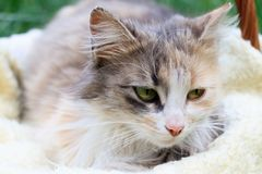 A beautiful colorful cat lying in a basket stock photos