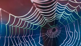 Beautiful colorful cobweb on dark blurred background Royalty Free Stock Photo