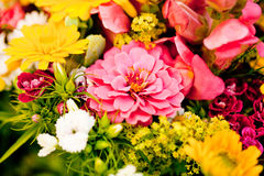 Beautiful colorful collection of flowers spring summer celebration Royalty Free Stock Photography