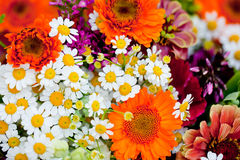 Beautiful colorful collection of flowers spring summer celebration Royalty Free Stock Image