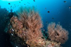 Beautiful colorful coral reef and tropical fish underwater in Ma Royalty Free Stock Photos