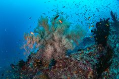 Beautiful colorful coral reef and tropical fish underwater in Ma Royalty Free Stock Photo