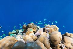 Coral reef underwater. Beautiful colorful coral reef and tropical fish underwater in Maldives Stock Photography
