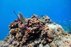 Coral reef underwater Stock Image