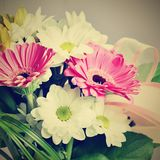 Beautiful colorful daisy flowers.Gerbera. Spring background - garden. Royalty Free Stock Images