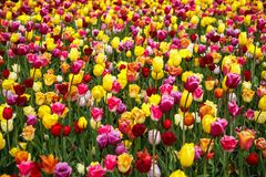 Beautiful flower garden with colorful blooming flowers Stock Photography