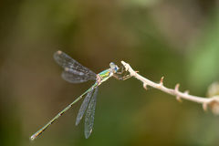 Beautiful colorful dragonfly Stock Photo