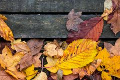 Beautiful colorful dry leaves as autumn fall season background stock photos