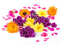 Beautiful colorful eatable flowers. Various colorful flowers on white background Royalty Free Stock Images