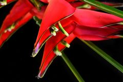 Beautiful colorful exotic flowers close up stock image