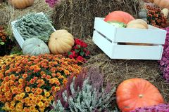 Still life with lot of flowers and autumn vegetables on hay Royalty Free Stock Images