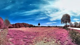 Beautiful and colorful fantasy landscape in an asian purple infrared photo style royalty free stock image