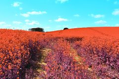 Beautiful and colorful fantasy landscape in an asian purple infrared photo style stock image