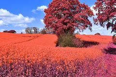 Beautiful and colorful fantasy landscape in an asian purple infrared photo style royalty free stock photo