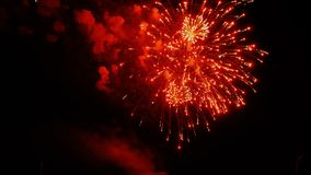 Beautiful colorful firework. Celebration stock video footage